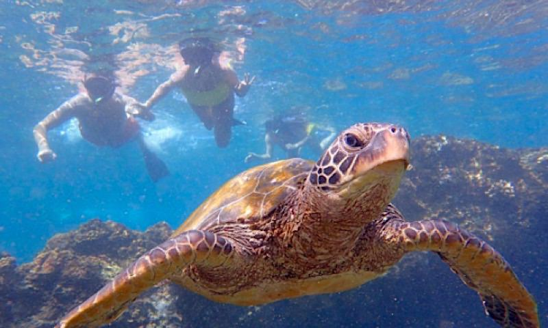 photo of Wailea Snorkeling by Andaz Beach Crew